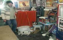 Kelkit Te 5 Yıldır Sokak Kedisi Ve Yavrularını Bakıyor