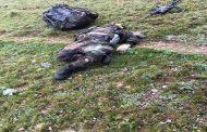 Kürtünün Sarıtaş Yaylasında 2 Terörist Etkisiz Hale Getirildi