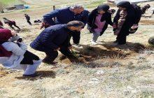 500 Adet Çam Fidanı Dikim Programına Milli Eğitim Müdürü Yücel Katıldı.