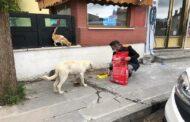 Başkan Nas Sokak Hayvanları İçin Çalışmalarımızı Sürdüreceğiz.