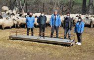 Gümüşhane Gıda Tarım ve Hayvancılık İl Müdürlüğü Tarafından 100'er koyun dağıtımı yapıldı