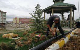 Refüşler ve Ağaçlar Damlama Su sistemi İle Sulanmaya Devam Ediyor